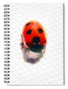 The Shy Ladybug Spiral Notebook