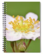The Simplest Rose Spiral Notebook