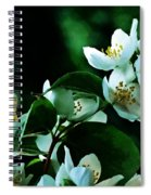 The Soft White Blossom  Spiral Notebook