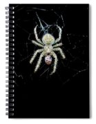The Spider Spiral Notebook