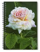 The Splendor Of The Rose Spiral Notebook