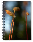 The Third Spiral Notebook