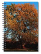The Tree Of Life Spiral Notebook