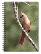 The Youngster Spiral Notebook