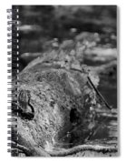 There Is A Frog On The Log Spiral Notebook