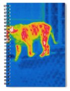 Thermogram Of A Tiger Spiral Notebook