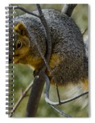 This Is My Tree Spiral Notebook