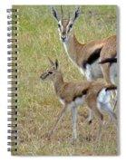 Thomsons Gazelle Spiral Notebook