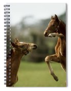 Thoroughbred Foals Playing Spiral Notebook