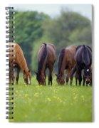 Thoroughbred Horse, Ireland Spiral Notebook