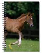 Thoroughbred Horse, National Stud Spiral Notebook