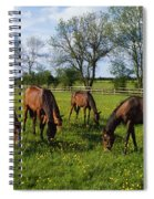 Thoroughbred Horses, Yearlings, Ireland Spiral Notebook