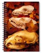 Three Animal Skulls Spiral Notebook