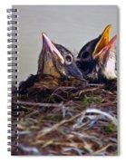 Three Baby Robins Spiral Notebook