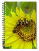 Three Bees Hunkering Down Spiral Notebook