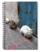 Three Cats In Essaouira Spiral Notebook