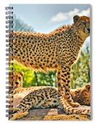 Three Cheetahs Spiral Notebook