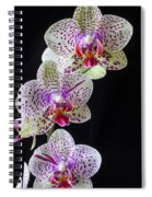Three Orchids Spiral Notebook