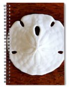 Three Sand Dollars Spiral Notebook