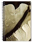 Three Stripes Spiral Notebook