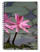 Three Sweet Pink Water Lilies Spiral Notebook