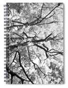 Three Trees Reach For The Sky Black And White Spiral Notebook
