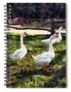 Three White Geese Spiral Notebook