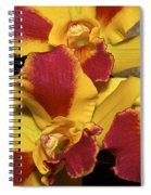 Three Yellow And Red Orchids Spiral Notebook