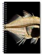 Tibetan Glassfish Spiral Notebook