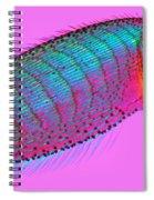 Tibia Of Rear Leg Of Honeybee Spiral Notebook