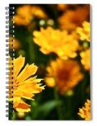 Tickseed Spiral Notebook