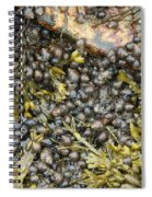 Tidal Pool With Rockweed Spiral Notebook