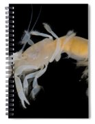 Tidepool Ghost Shrimp Spiral Notebook