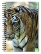 Tiger - Endangered - Wildlife Rescue Spiral Notebook