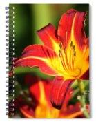 Tiger Lily0239 Spiral Notebook