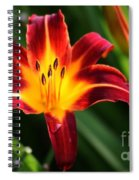 Tiger Lily0263 Spiral Notebook