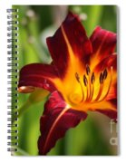 Tiger Lily0275 Spiral Notebook