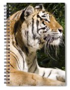 Tiger Observations Spiral Notebook
