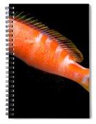 Tiger Queen Anthias Spiral Notebook