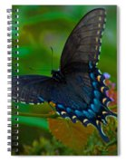 Tiger Swallowtail Butterfly Female Spiral Notebook