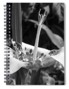 Tigridia Pavonia Or Mexican Shell Flower Spiral Notebook