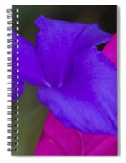 Tillandsia Cyanea Spiral Notebook