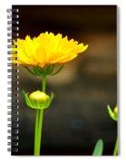 Times Three Spiral Notebook