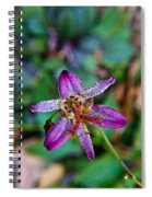 Toad Lilly 1 Spiral Notebook