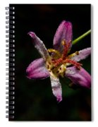 Toad Lilly 2 Spiral Notebook