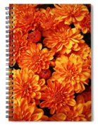 Toasted Orange Chrysanthemums Spiral Notebook