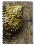 Top Shell Clanculus Sp Spiral Notebook