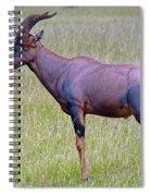Topi Antelope Spiral Notebook