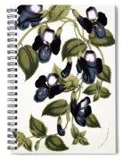 Torenia Asiatica Pulcherrima Spiral Notebook