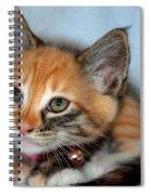 Tortoiseshell Kitten Spiral Notebook